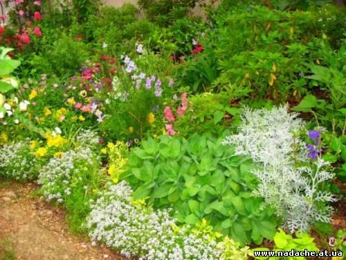 Цветов оригинальные клумбы для цветов